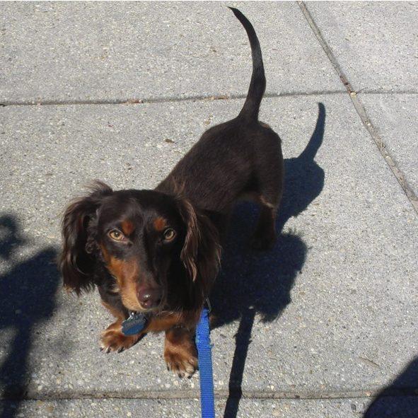 Dog walker DC